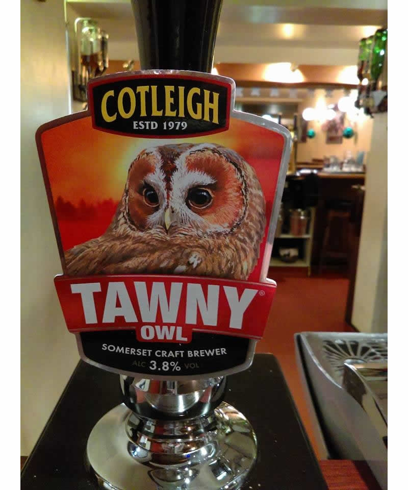 cotleigh-tawny-owl